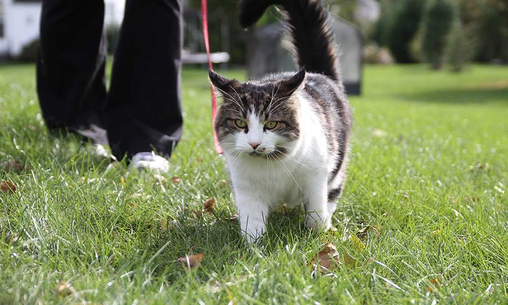 Leash Train Your Cat In 7 Excruciating Steps Clover And Thyme