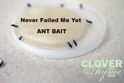Ant Bait