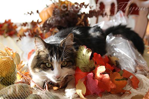 Cat Centerpiece