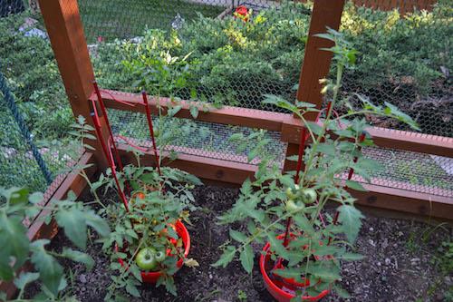 Garden Enclosure 10 (1)